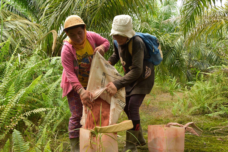 women workers palm oil