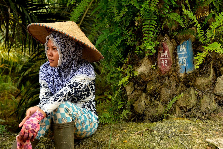 woman oil palm plantation worker