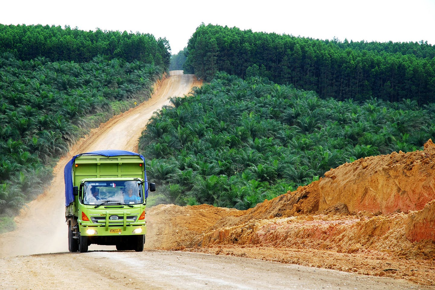 oil palm indonesia2