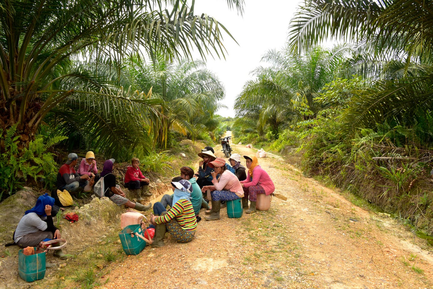 palm oil workers indonesia