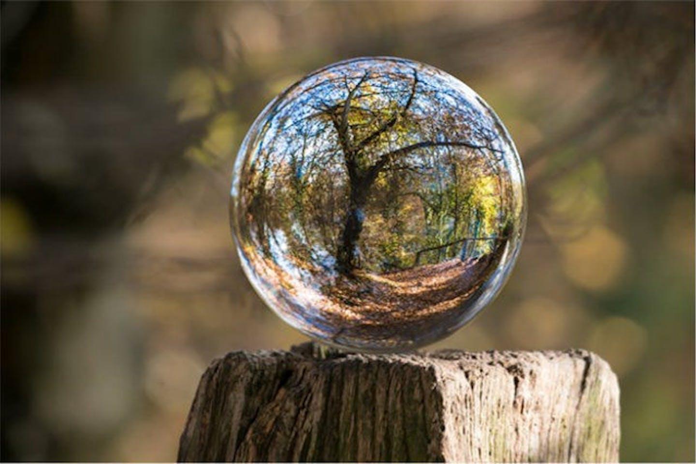 tree as seen through a crystal ball