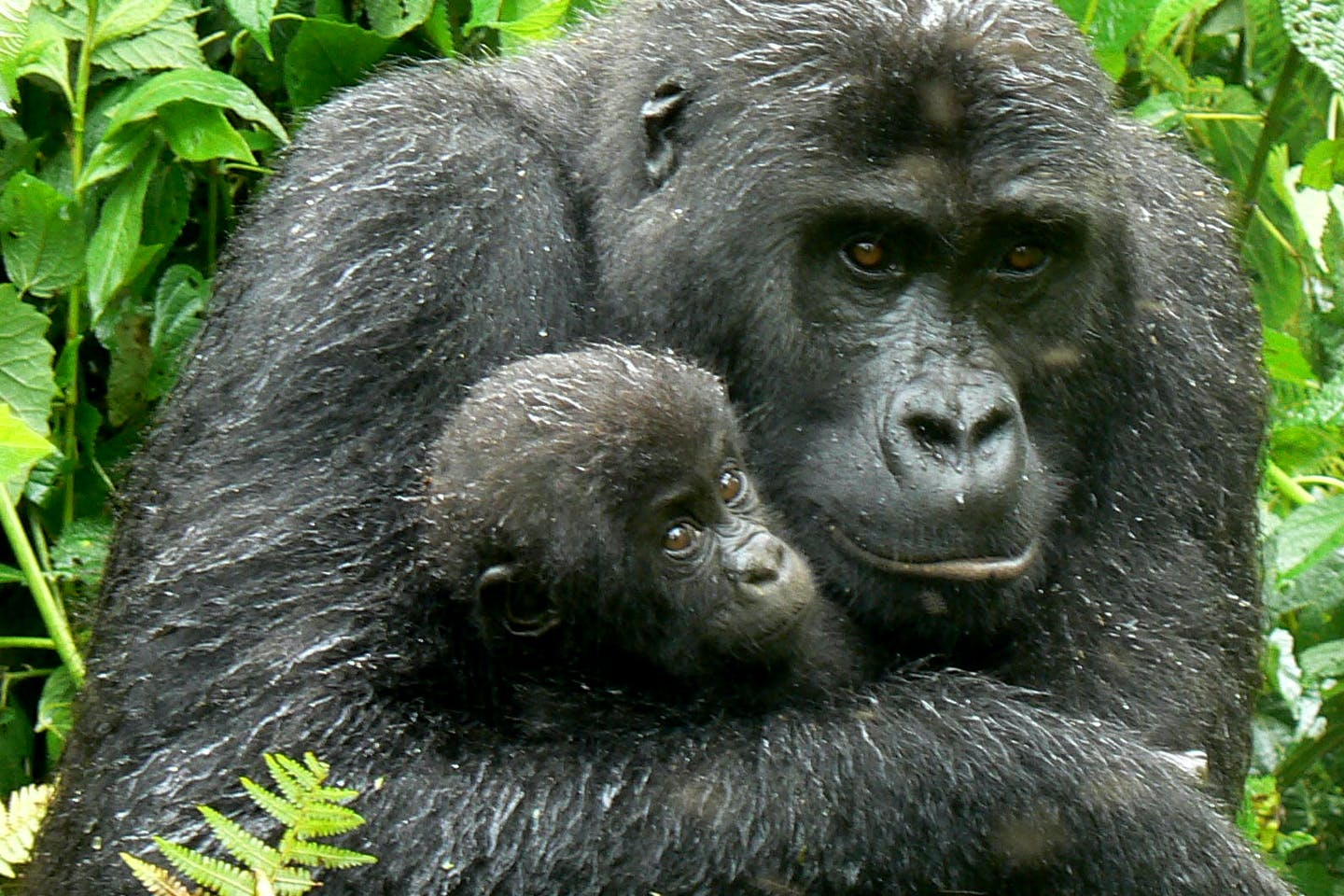 mother holds child in Congo