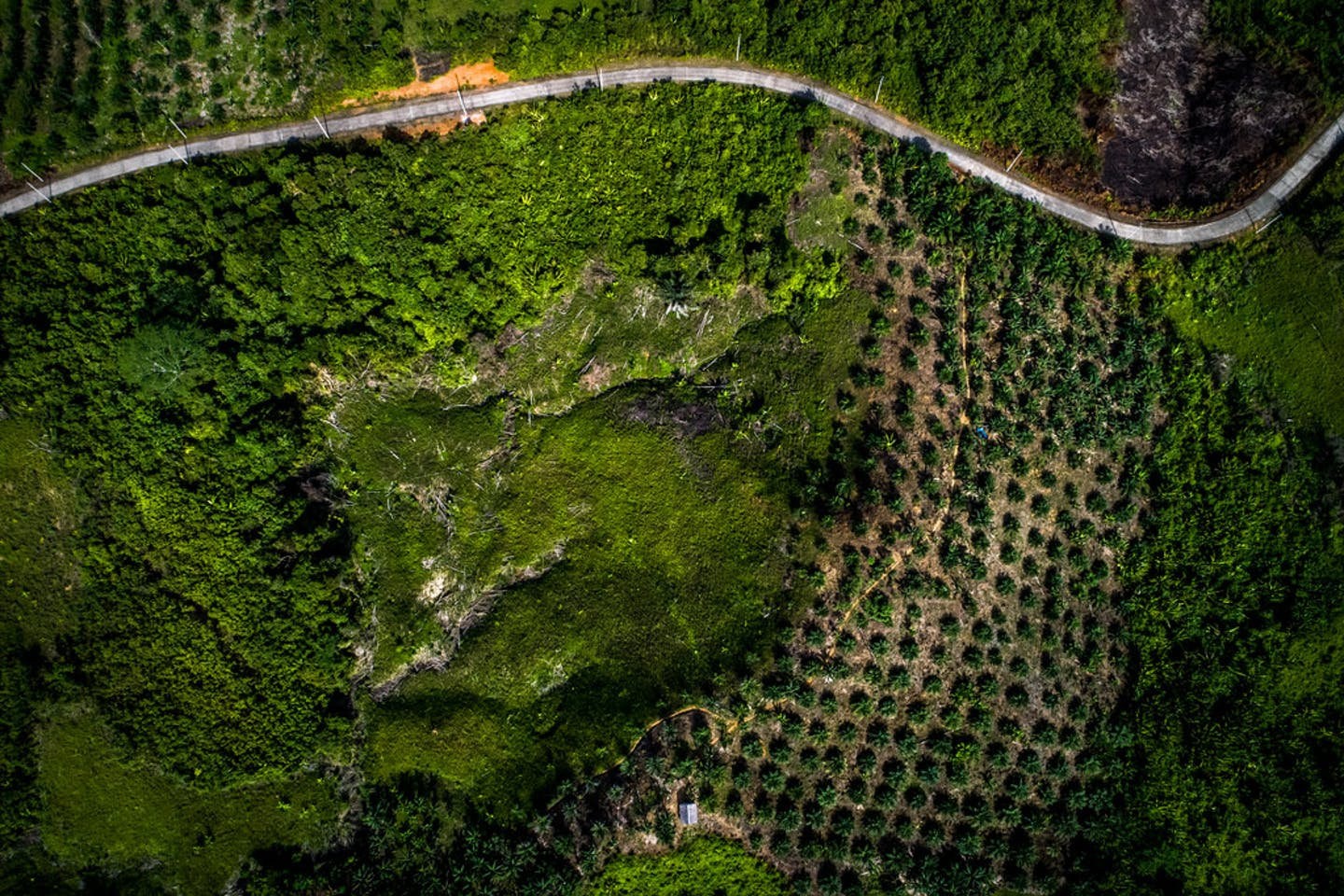 palm oil land grab indonesia