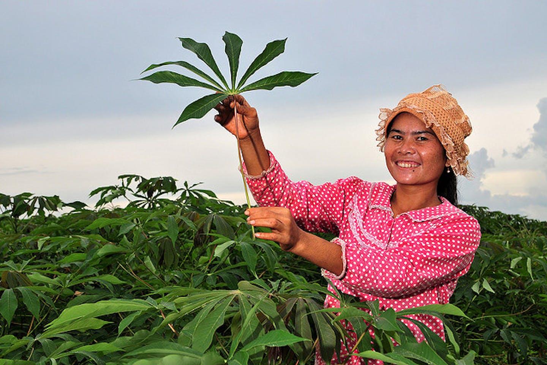 woman farmer in Cambodia