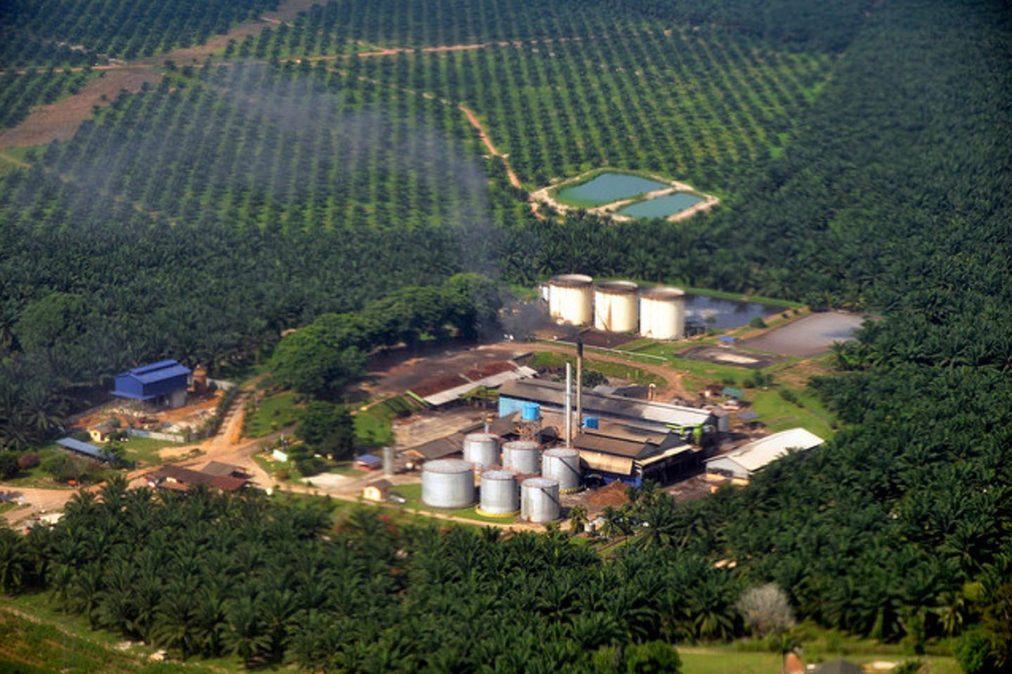 palm oil mill in malaysia sepang