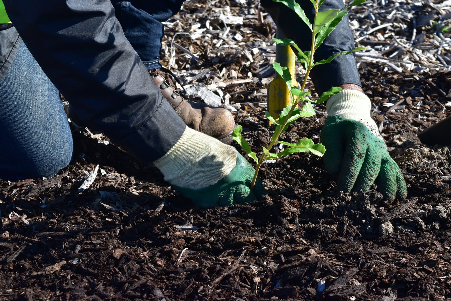 Hands plant a tree