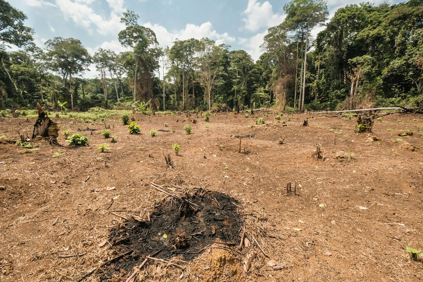 deforestation congo