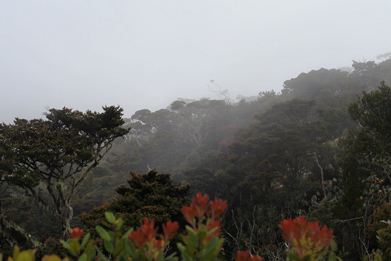 Leuser mists