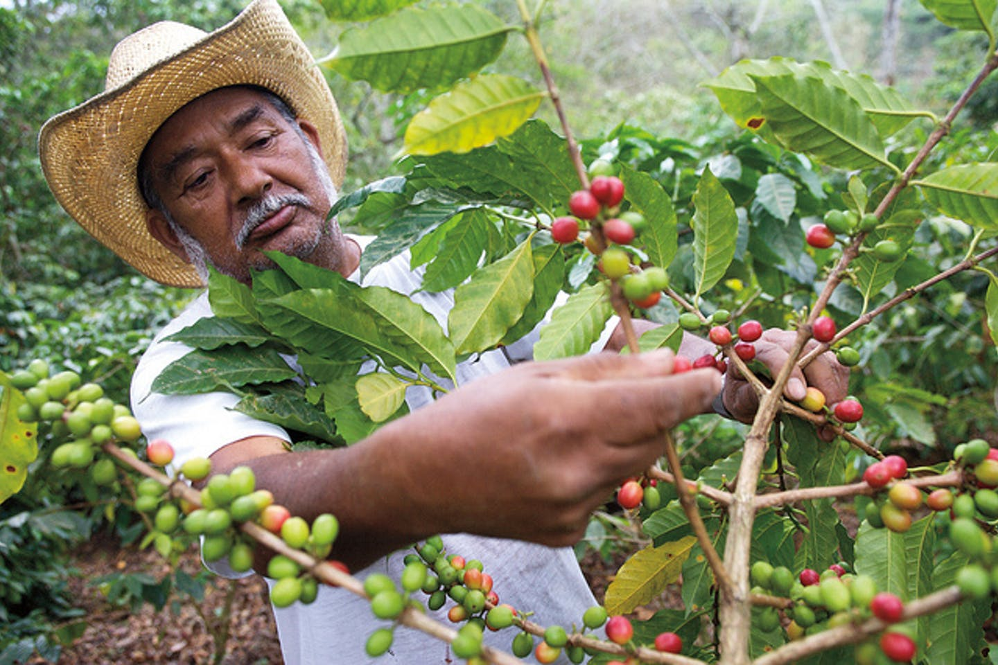 coffee farmer lowers carbon footprint