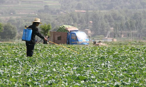 Food supply fears spark China land grab