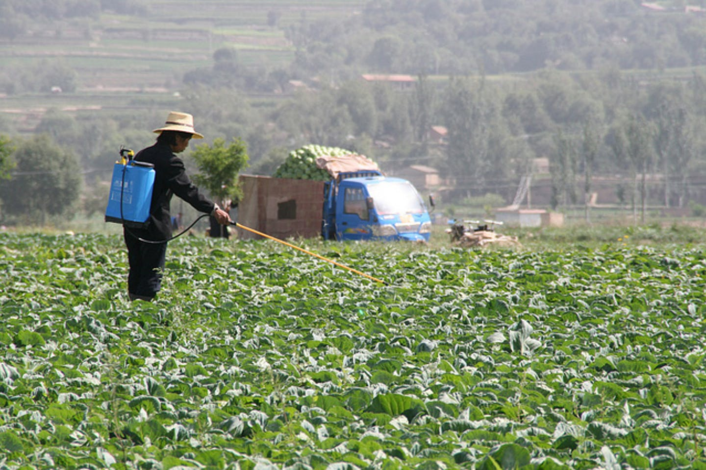 farmer sprays pesticide