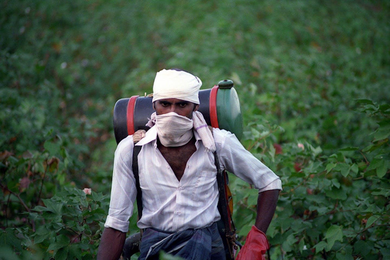 Pakistani cotton farmer