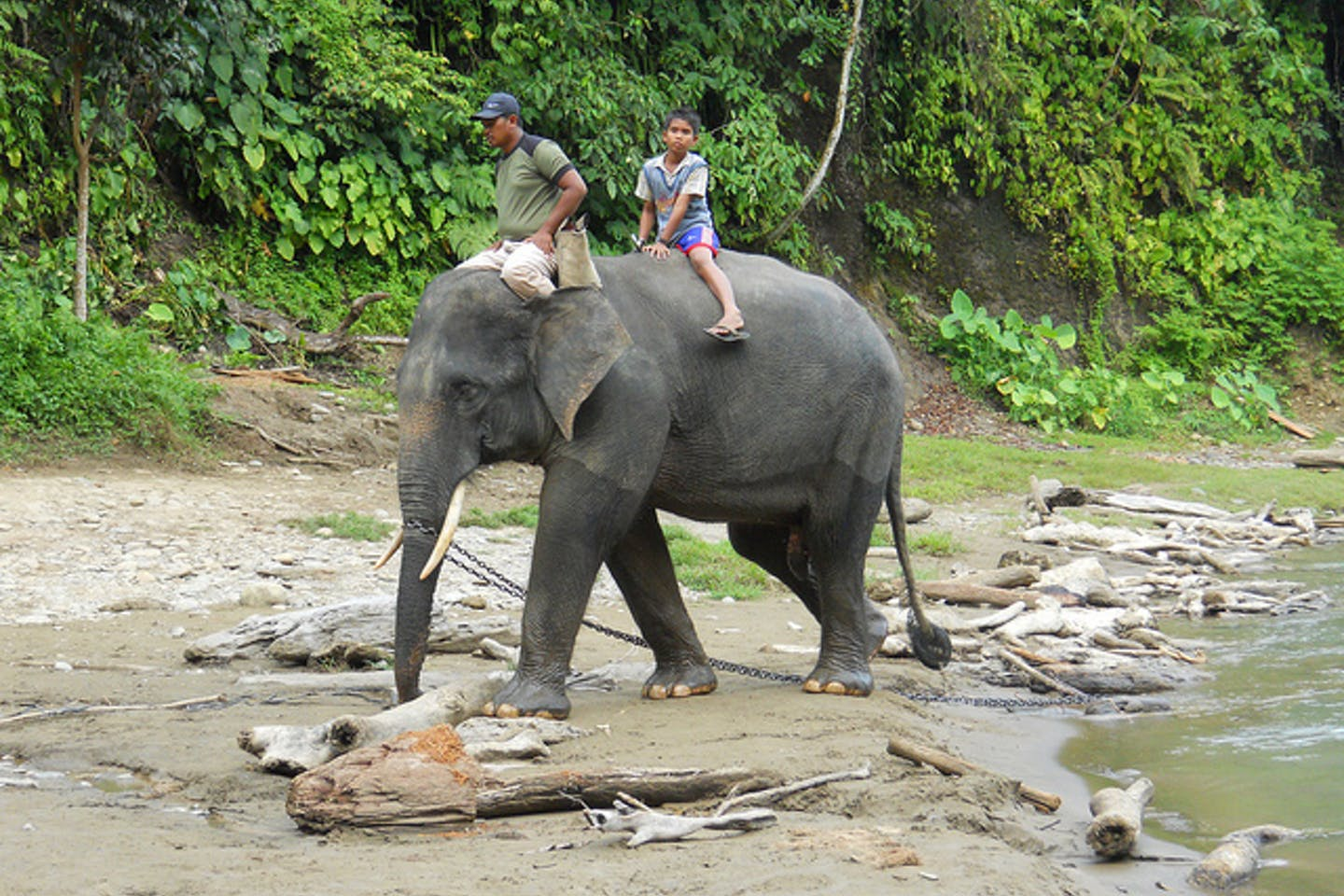 elephant riding in indonesia