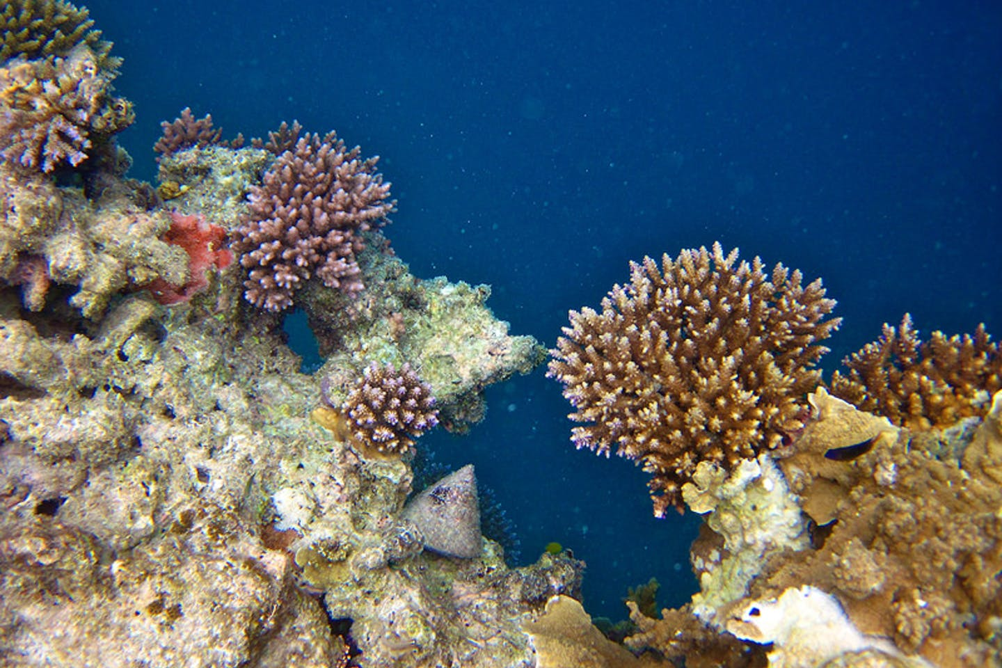 great barrier reef3