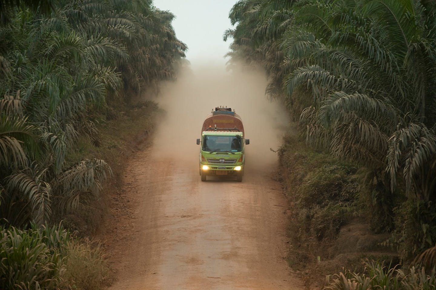 harapan forest indonesia palm oil