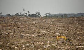 Famous brands 'turning blind eye' to deforestation caused by demand for soy, beef and other commodities