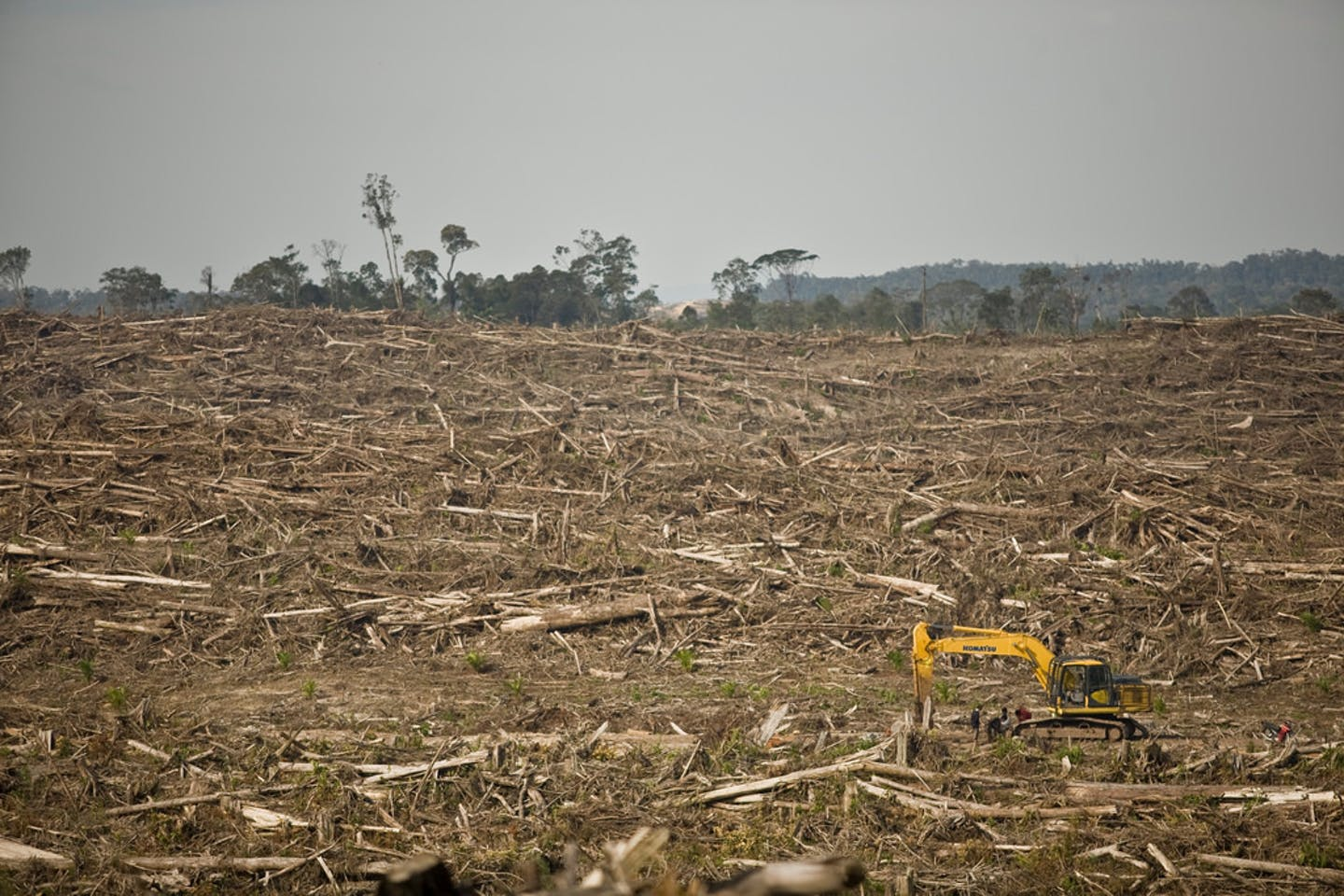 deforestation palm oil1