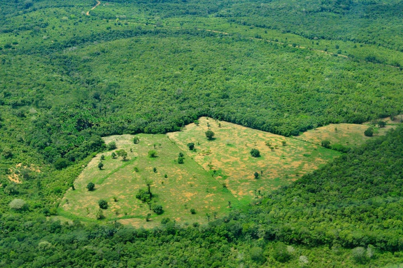 brazil aerial CIFOR