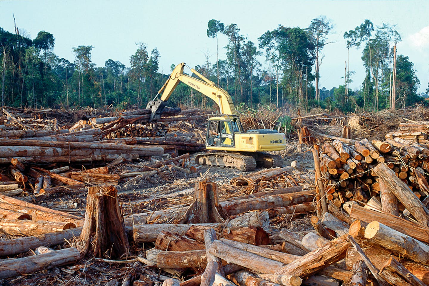 indonesia rainforest clearing
