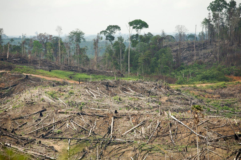 deforestation indonesia rainforest action network