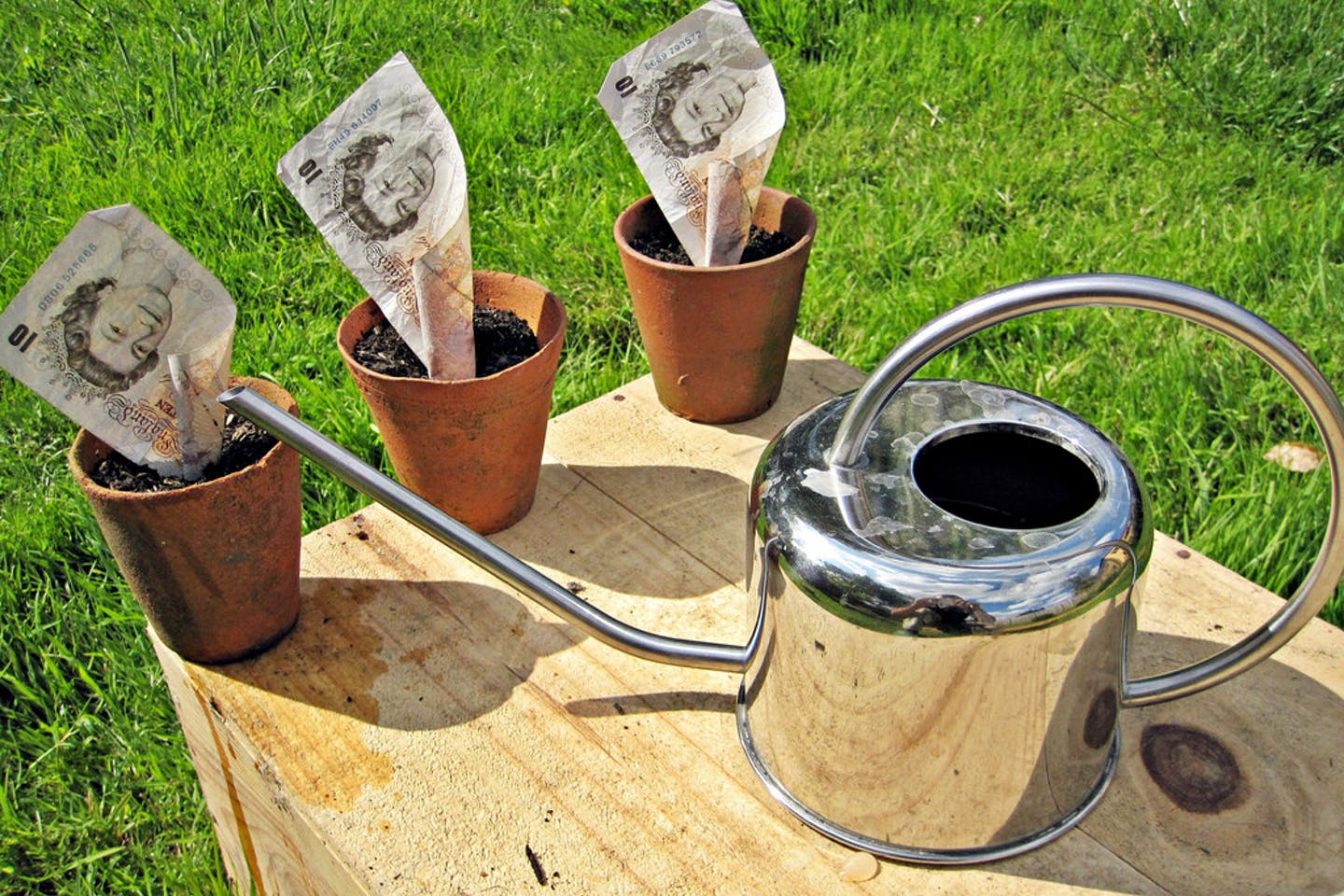 growing some money in a pot
