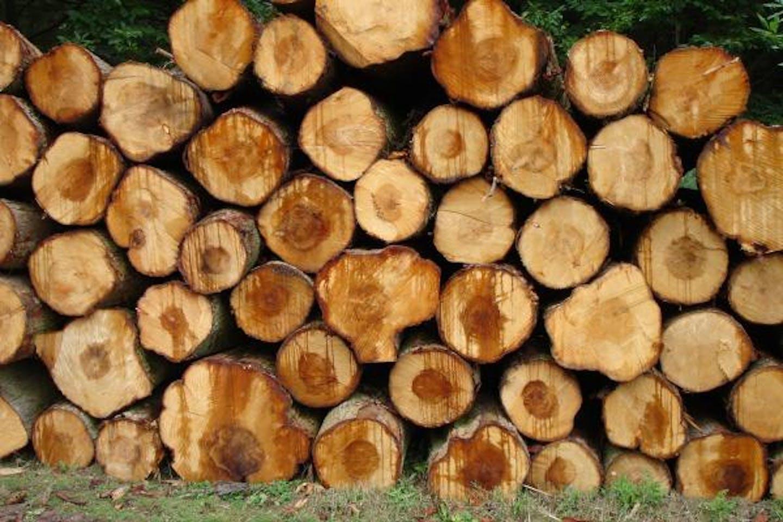 Wood fuel