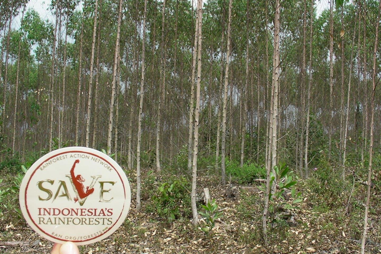 paper plantations indonesia
