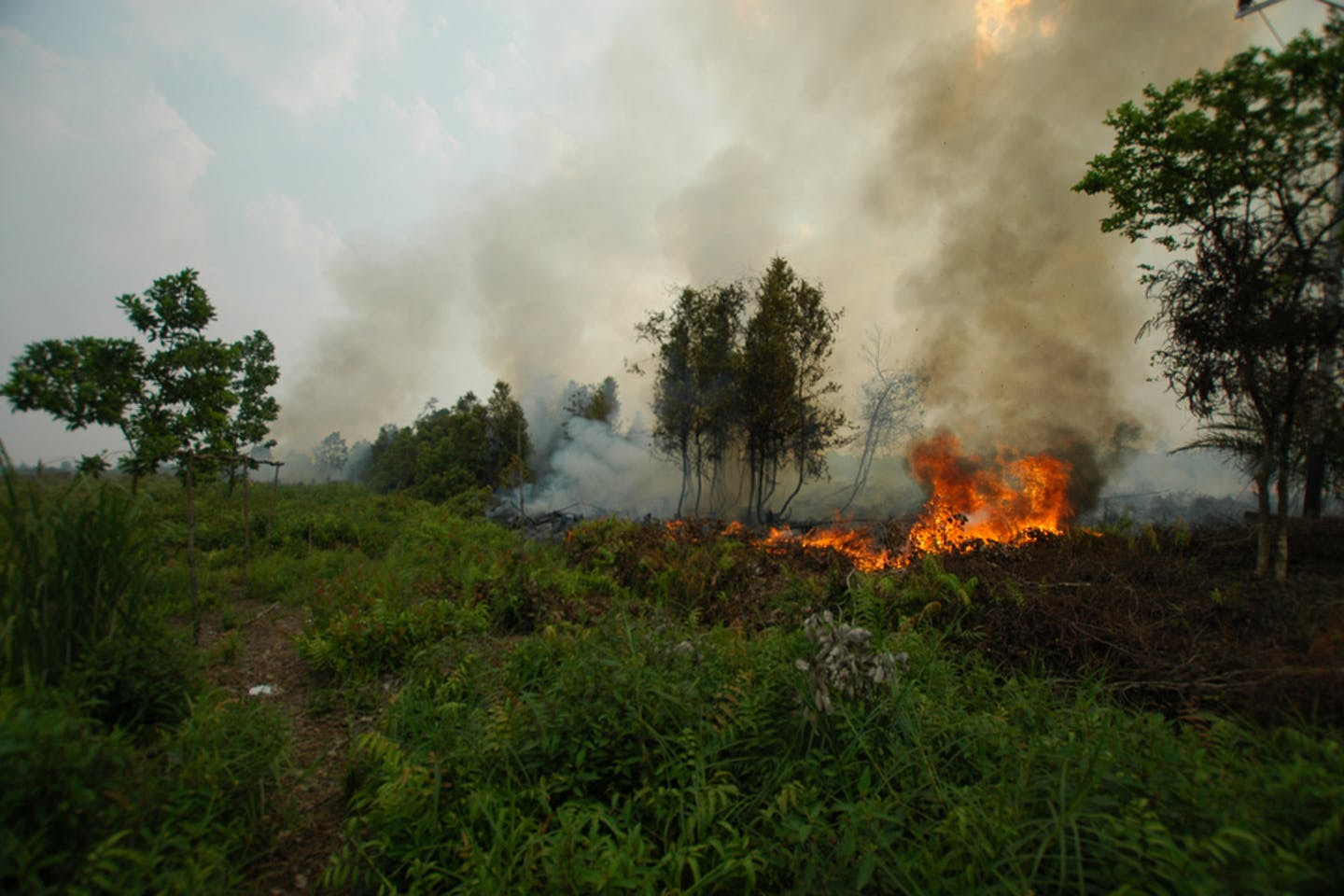A forest fire in Kalimantan