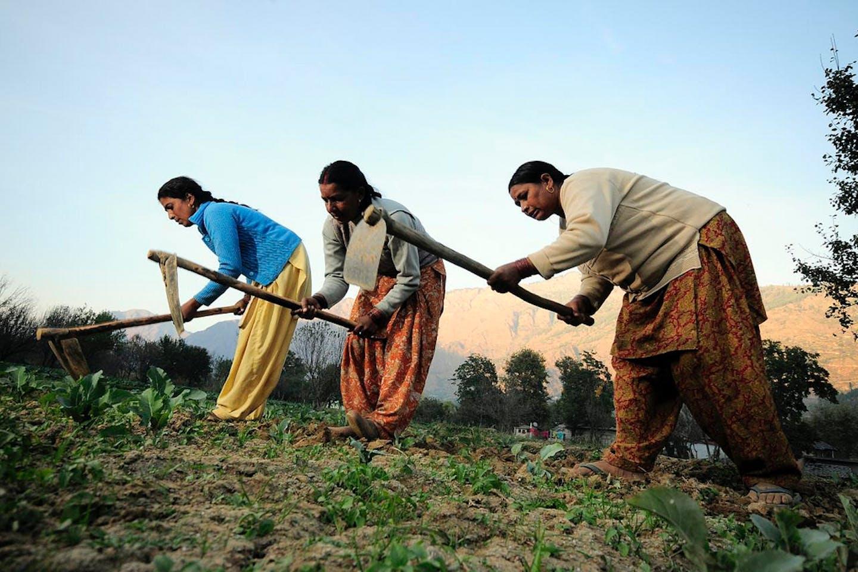 Women farmers at work in their vegetable plots near Kullu town, Himachal Pradesh, India