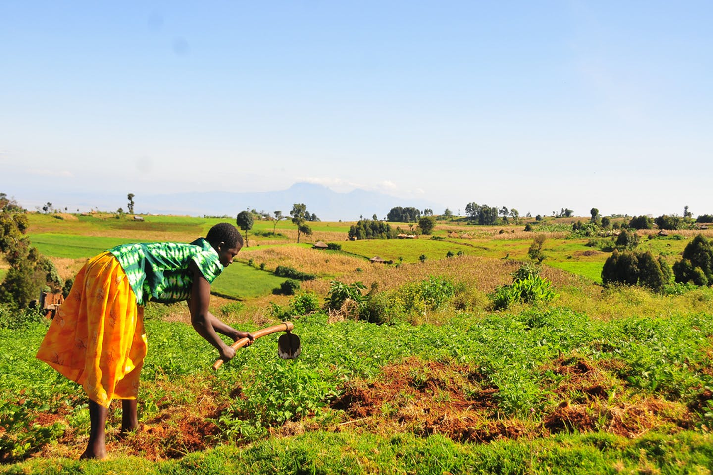 woman farmer in uganda