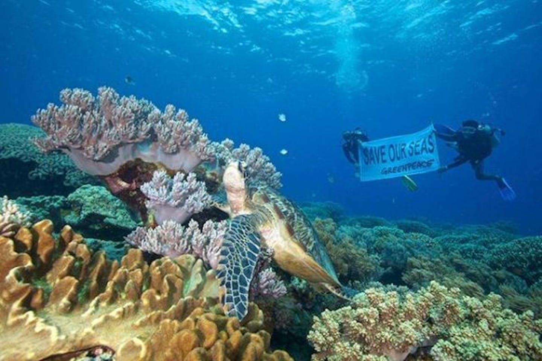 Apo Island, Philippines Greenpeace