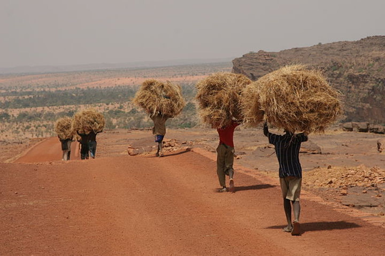 Men carrying straw in Mali