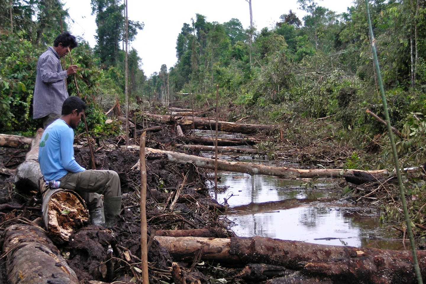 tearing forests in tanjung puting national park borneo