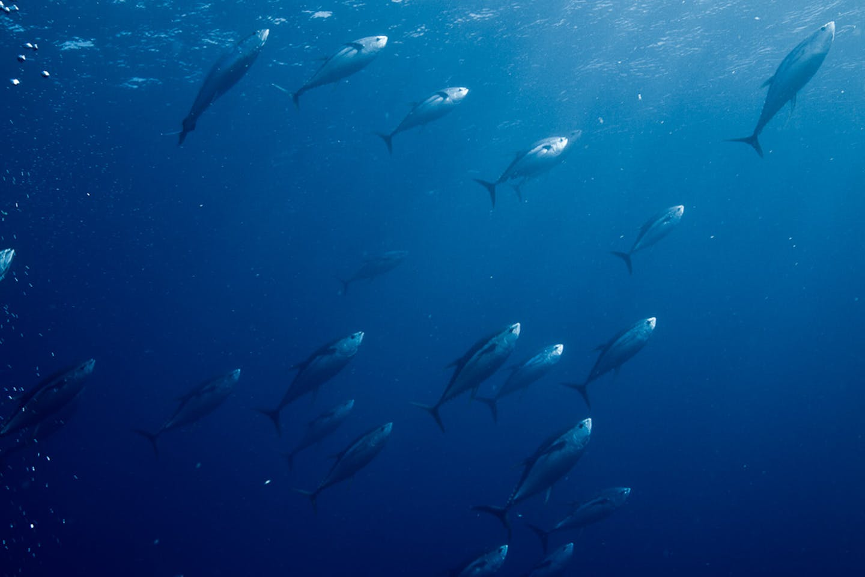 tuna ocean mexico