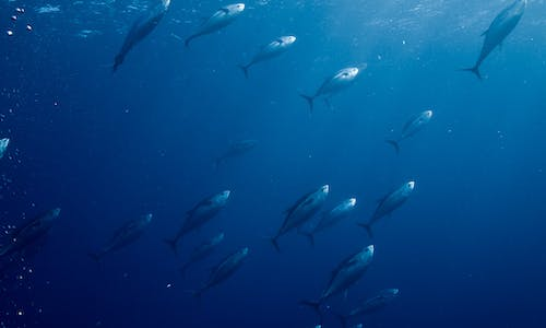 What transparency in tuna fishing means to the development of this country