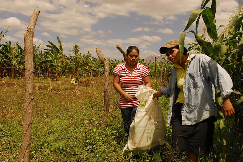 corn famers of nicaragua