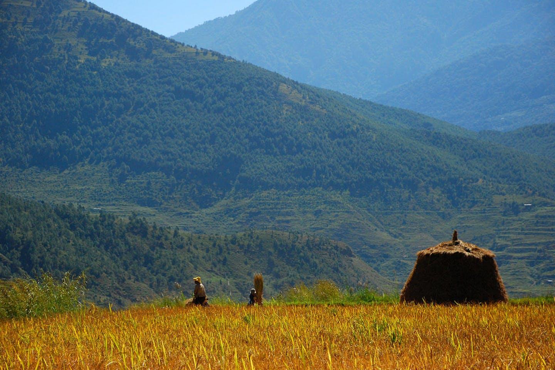 bhutan farmers