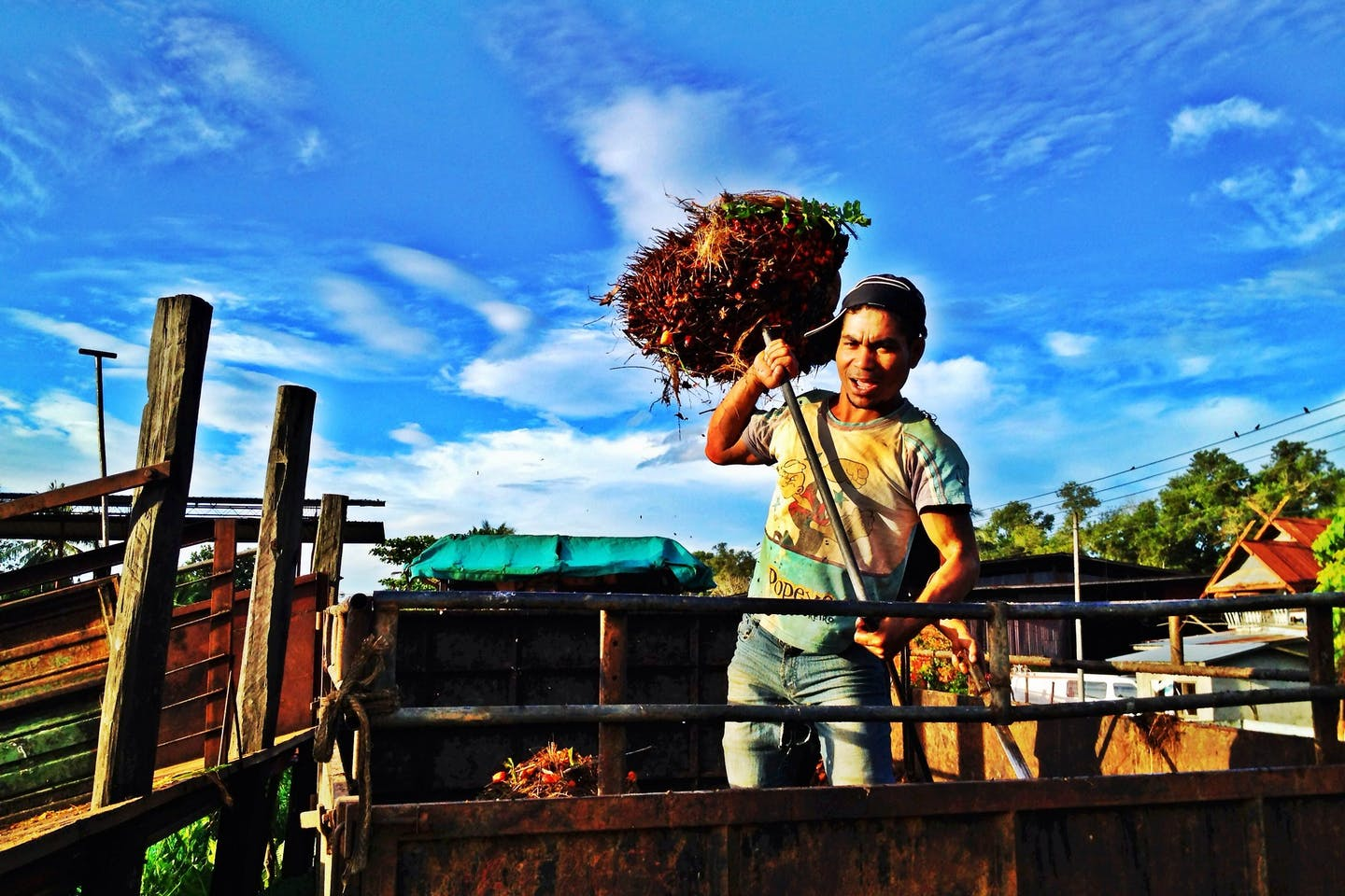 Malaysian oil palm worker