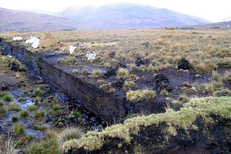 carbon peatland