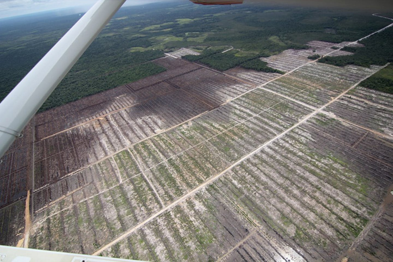 deforestation on  peatlands in Indonesia