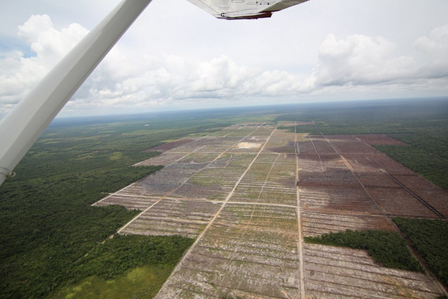 peatland deforestation in Borneo