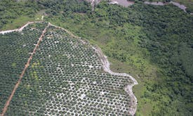 Many commitments, little transparency in cutting deforestation from corporate supply chains