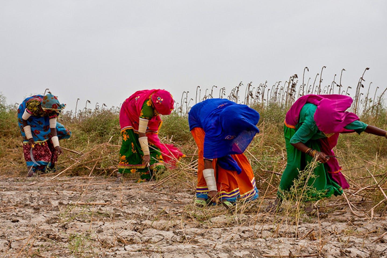 Women farmers in Pakistan