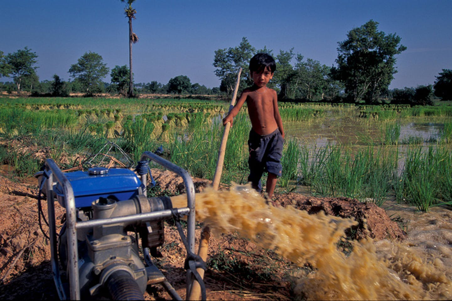 Child in rice paddy in Cambodia