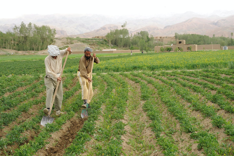 potato farmers afghanistan
