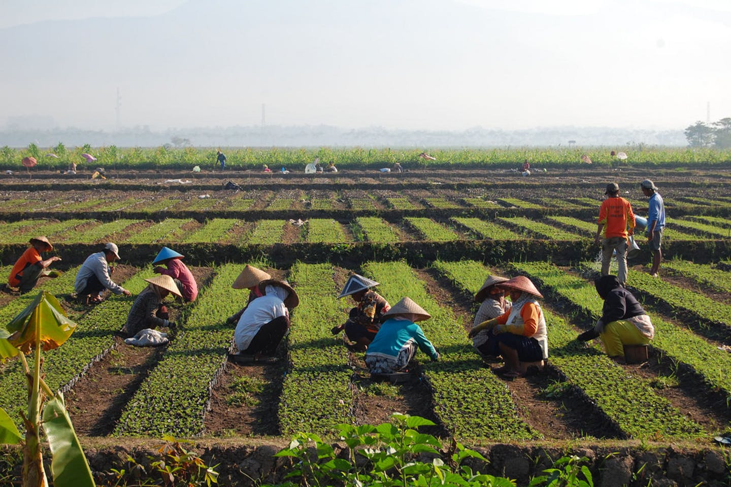 farming in java indonesia