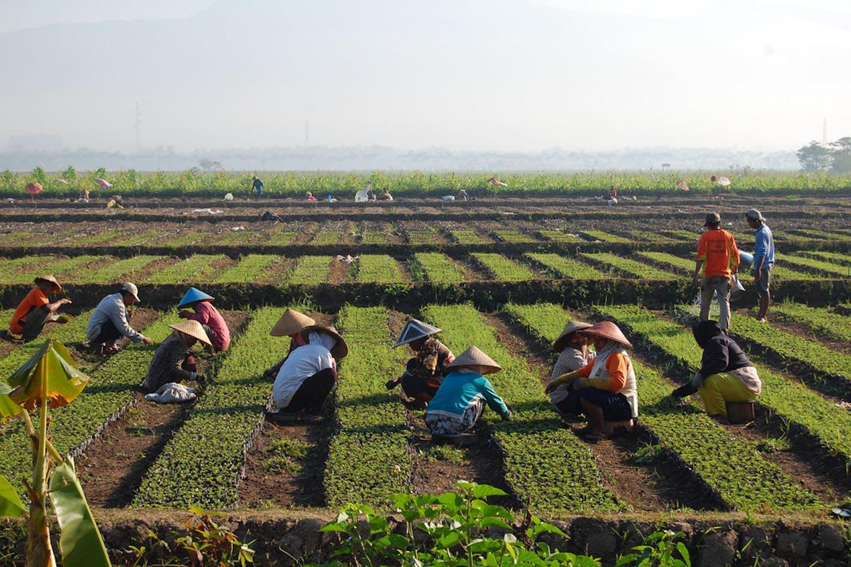 farmers asia