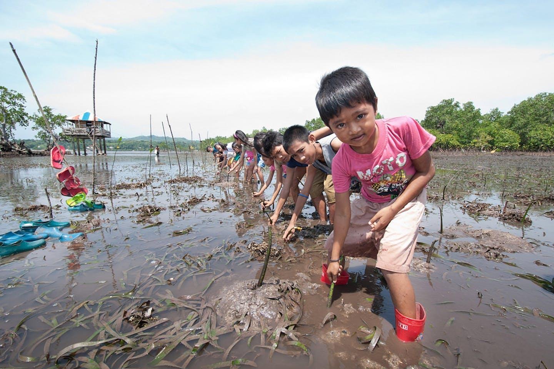 Children plant mangrove saplings in the Philippines