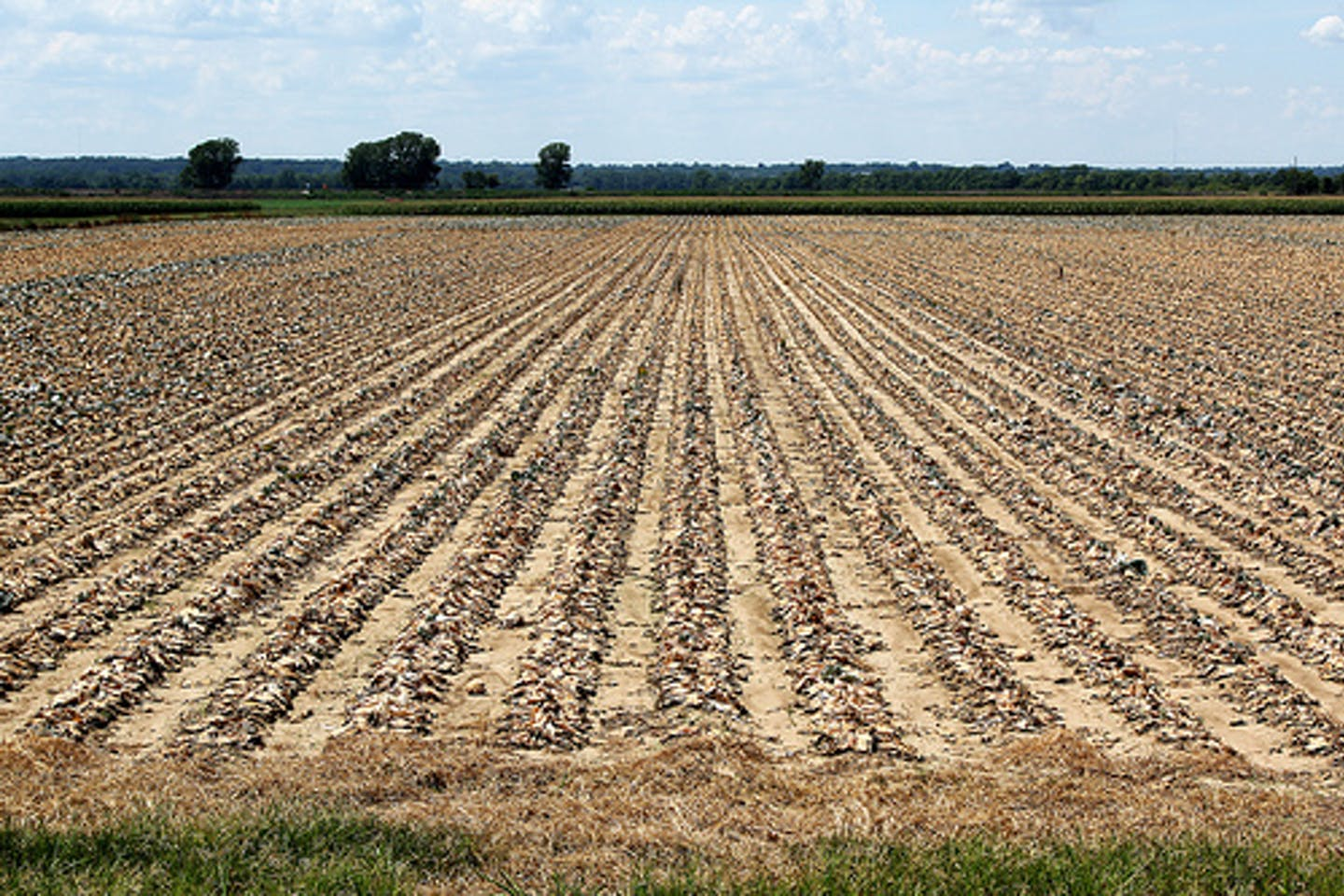 US farms in drought
