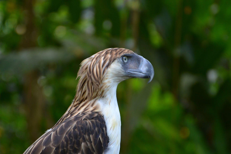 PH eagle